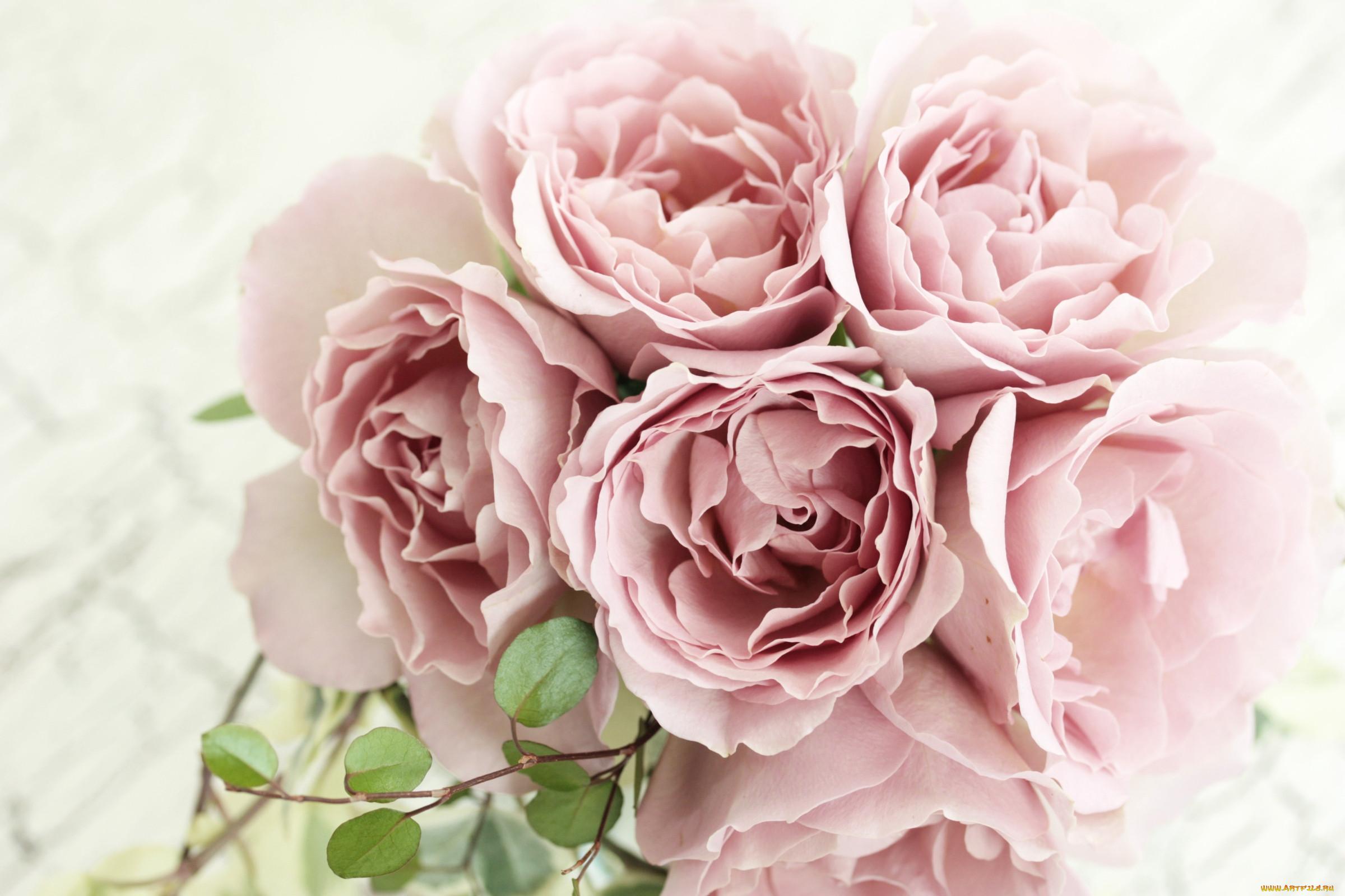 Цветы Розы, обои для рабочего стола ...: www.artfile.ru/i.php?i=680469&res=2400x1600